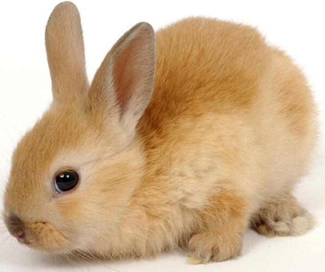 sincerelyserajay crueltyfree bunny